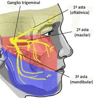nervio trigemino ramas