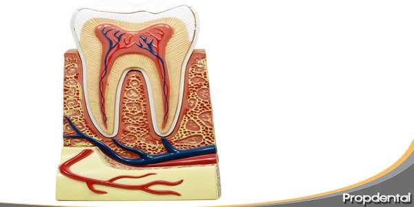 Nervio diente