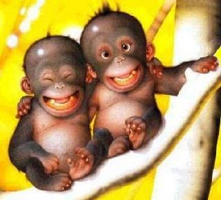 relación sonrisa de los gorilas con la humana