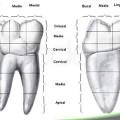 anatomia de los dientes