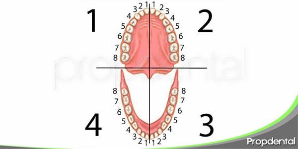 curiosidades sobre los dientes
