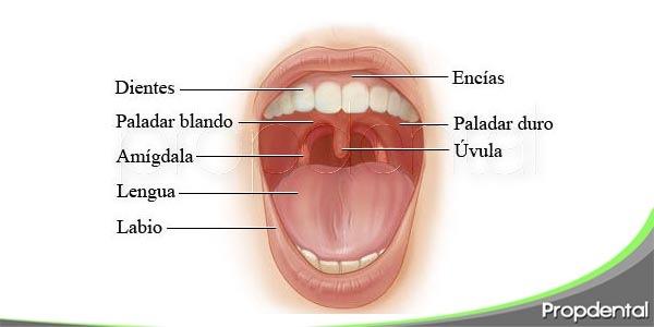 más allá de los dientes: ¿qué hay en tu boca?