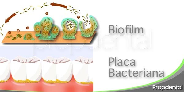 placa bacteriana vs. biofilm