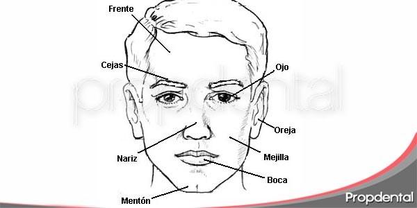 toda la información de la cara