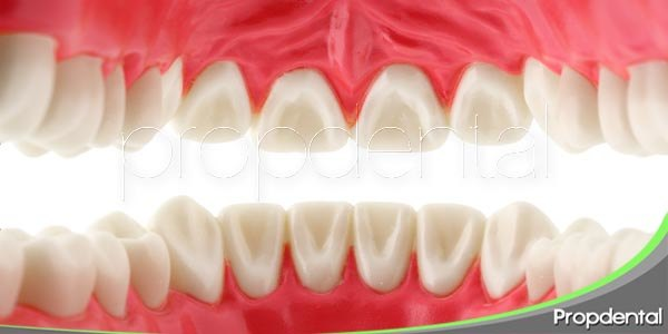 Tipos y funciones de dientes