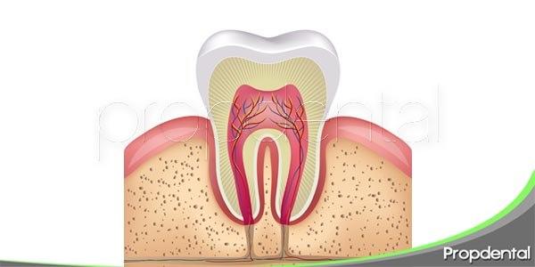 Las encías, un elemento importante de nuestra boca