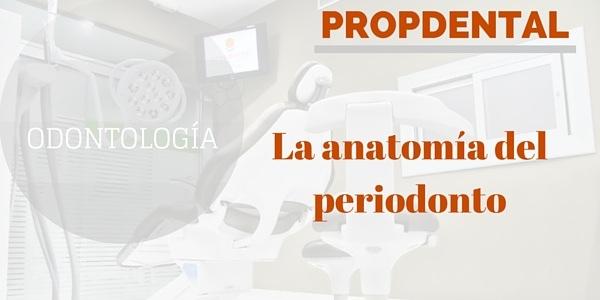 La anatomía del periodonto